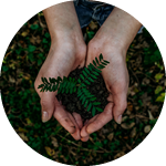 Consulenza in materia d'ambiente